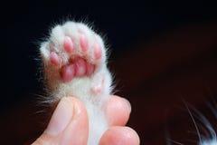 Kitten& x27;s paw Royalty Free Stock Image
