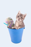 Kitten and yarn in a bucket. Royalty Free Stock Image
