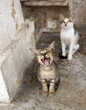 Kitten. Is yawning in the morning Royalty Free Stock Photography