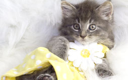 Kitten in yellow dress. Stock Image
