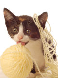 Kitten with yellow yarn Royalty Free Stock Photography