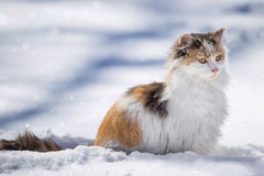 Kitten. A young kitten sitting in the snow Royalty Free Stock Image