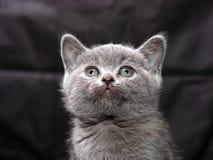 Kitten03 στοκ εικόνες