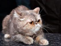 kitten42 Royaltyfri Fotografi
