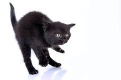跳的kitteng 库存照片