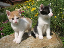 Kittens. Two kittens in the garden Royalty Free Stock Images