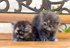 Kittens. Two small kittens sit on a wooden bench Stock Image