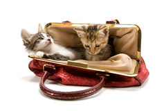 Kittens. Adorable kittens in a red bag (isolated on white Royalty Free Stock Images