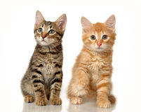 Kittens Royalty Free Stock Photo