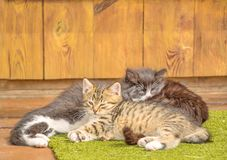kittens lizenzfreie stockfotos