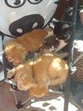 kittens lizenzfreie stockfotografie