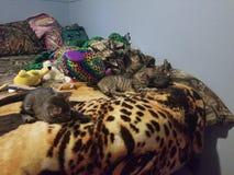 kittens lizenzfreie stockbilder