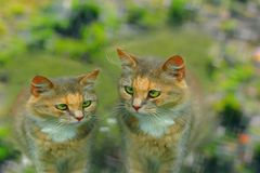 Cute sad green-eyed kittens. Two cute sad green-eyed kittens on a green background of grass stock images