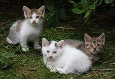 Kittens stock photo