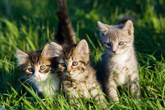 Kittens. Three kittens sitting in the grass with the sunshine all around them royalty free stock photo
