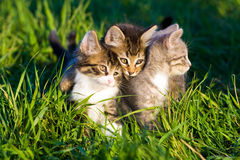 Kittens. stock image