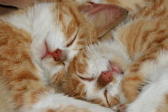 Kittens 2 royalty free stock photography
