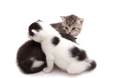 Kittens. Two baby cats playing together Royalty Free Stock Photo