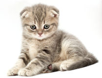Kittens Royalty Free Stock Image