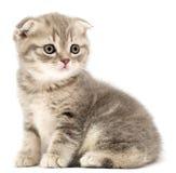 Kittens Royalty Free Stock Photos