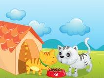 Kittens vector illustration