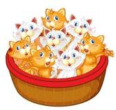 Kittens Royalty Free Stock Photo