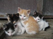 Kittens. Four cat siblings sitting together Royalty Free Stock Photo