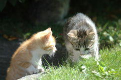 Kittens. In garden stock image