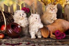 Free Kittens Royalty Free Stock Image - 34583376