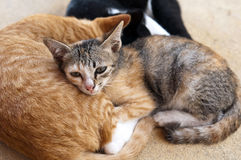 Kittens. Sleeping and resting kittens, red-haired, white-black and tabby Royalty Free Stock Image