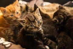 kittens Lizenzfreies Stockfoto