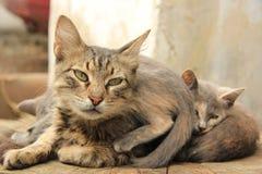kittens Stockfotos