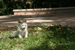 Kittens 5. Feral kittens are often found on the streets of Jerusalem stock photography