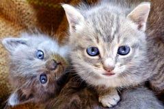 kittens stockbild