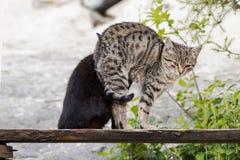 kittens Fotografie Stock Libere da Diritti