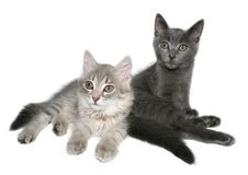 Kittens. Two kittens on a white background Stock Image