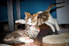 kittens Stockfotografie