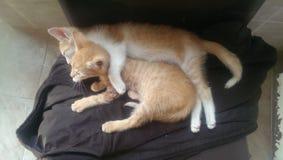 kittens stockfoto