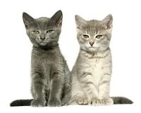 Kittens. Royalty Free Stock Photography