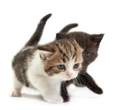 The kittens Royalty Free Stock Photos