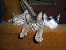 kittens stockbilder