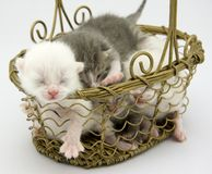 Kittens. A basket full of kittens royalty free stock photos