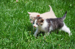 Free Kittens Royalty Free Stock Photos - 9278228