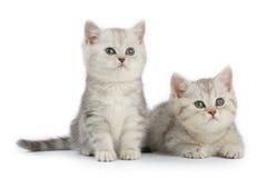 Free Kittens Stock Photos - 9927923