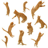 Kittens in action. Collection of kittens in action. On white background. 3500 x 3500 pixels Royalty Free Stock Images
