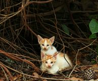 Kittens. Adorable Kittens in nature Royalty Free Stock Image