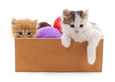 Free Kittens And Colorful Balls In The Box. Stock Images - 114074054