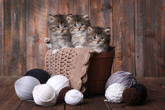 Kittens With Balls of Yarn in Studio Stock Photography