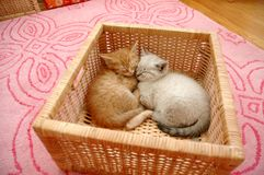 Kittens basket Royalty Free Stock Photo