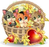 Kittens in a basket Stock Photography